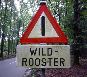 Wild-Rooster.jpg