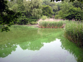 pond-reflection-1.jpg
