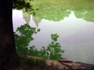 pond-reflection.jpg