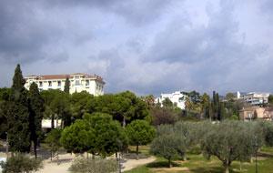 matisse-olives.jpg