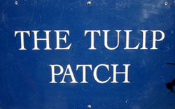 The Tulip Patch